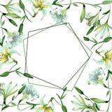 White lily floral botanical flowers. Watercolor background illustration set. Frame border ornament square. White lily floral botanical flowers. Wild spring leaf stock illustration