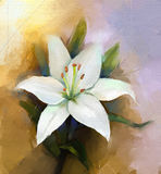 Oil painting white lily flower blossom  Royalty Free Stock Images