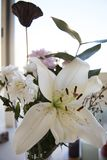 White lily flower in bouquet with bright background. Royalty Free Stock Photography