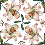White lily flower, color pencil, pattern seamless. White lily flower color pencil  white background  handmade pattern seamless Royalty Free Stock Photos