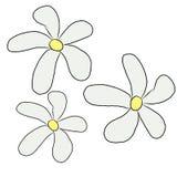 3 white lily flower flow vector illustration