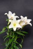 White lily flowers bouquet on black Stock Image