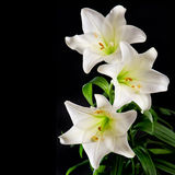 White lily flowers bouquet on black background. Condolence card Royalty Free Stock Photography