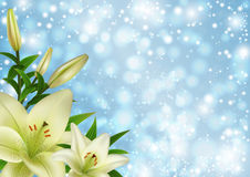 White lily flowers decoration Royalty Free Stock Photography