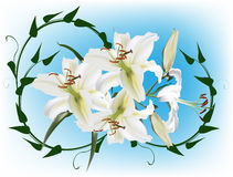 White lily flowers and green curl Stock Image