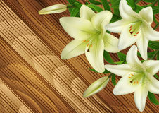 White lily flowers on wood background Stock Images