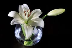 White lily in a glass vase Stock Photos