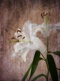 White lily, grungy background, vintage style Royalty Free Stock Photos