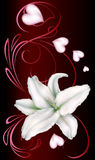 White lily and heart Stock Images