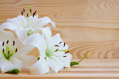 White lily isolated. White lily isolated on  wood background Stock Image