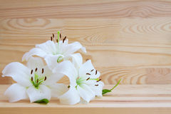 White lily isolated. White lily isolated on  wood background Stock Photography