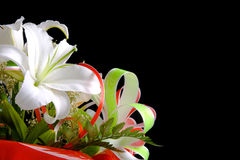 Free White Lily On Black Background Royalty Free Stock Images - 2810479