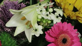 White lily opening between colorful flowers time lapse. Static medium close up time lapse shot of a lily opening in bloom in a colorful bouquet of various stock video footage