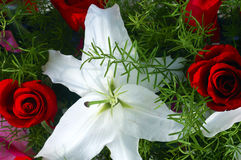 White lily and red rose stock photos