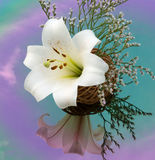 White lily reflected in the colored mirror. Beautiful White lily reflected in the colored mirror Stock Photos