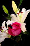 White Lily and rose Stock Photos