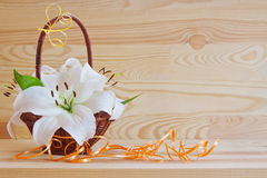 White lily . Stock Photography