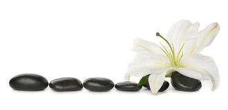 White lily and stones Royalty Free Stock Images