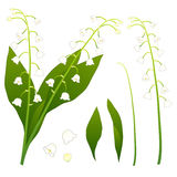 White Lily of the Valley. isolated on White Background. Vector Illustration.  stock illustration