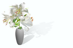 White lily in vase Royalty Free Stock Photography