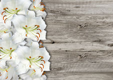 White lily on  wood background Royalty Free Stock Image
