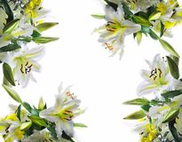 White lilys background. White lilys for spring background Stock Photos