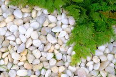 White limestone rocks and green grass, White rock under green le. Aves background Royalty Free Stock Photos