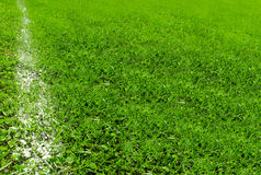 White line on soccer field Royalty Free Stock Photos