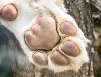 White lion's paw Stock Photo