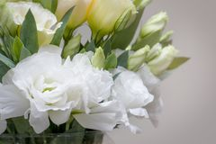 Beautiful white Lisianthus flowers look so much alike roses Royalty Free Stock Photo
