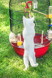 White little cat about bird in cage. On green grass Stock Photo