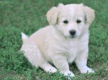 White little dog. Little dog sitting on grass Stock Photos