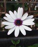 White little life royalty free stock image