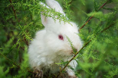 White little rabbit Royalty Free Stock Image