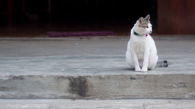 The white lonely cat Royalty Free Stock Images