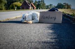 White Long Coat Dog Lying on Highway Royalty Free Stock Images