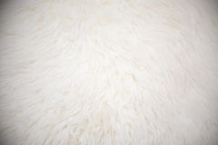 White long hair fur background Stock Image