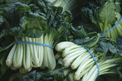 White long petiole bok choi Royalty Free Stock Photos