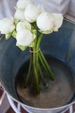 White Lotus. In aluminium bucket Royalty Free Stock Image