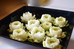 White lotus on black plate Royalty Free Stock Photo