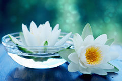 Free White Lotus Flower Stock Photo - 34515080