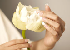 White lotus flower. Nice hands with nail art Stock Images