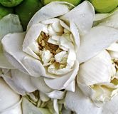 Visakha Bucha Day. Buddha's birth lotus flower meditation relax concept Vesak day. White lotus flower petal - Visakha Bucha Day. Buddha's birth lotus flower stock photos