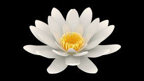 Lotus flower rotating alpha channel stock video