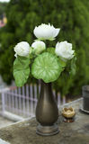 White lotus flower. In a vase Royalty Free Stock Images