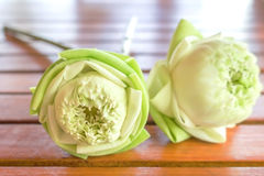 White lotus flowers  bouquet. On wood table Stock Images