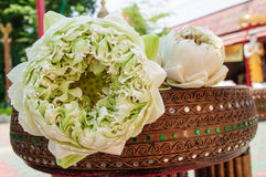 White lotus flowers. Used for religious offering in Thailand Stock Images