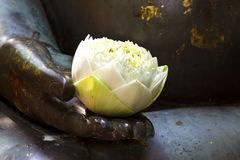 The white lotus Stock Images