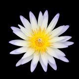 White Lotus isolated. White Lotus isolated on black background with clipping path Stock Images