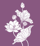 White lotus on purple background Royalty Free Stock Photos